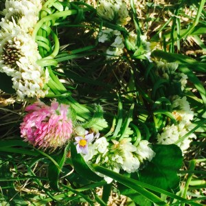 flower_bouquet1