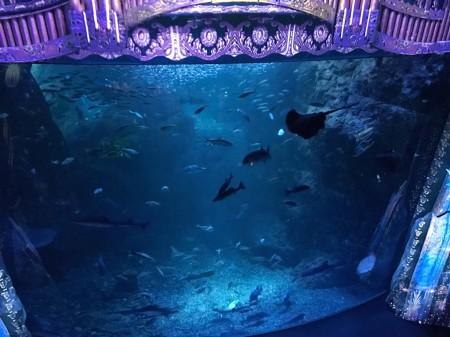 新江ノ島水族館 ナイトワンダーアクアリウム2017